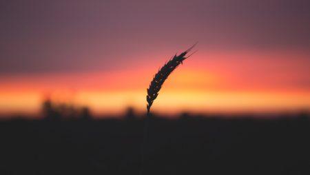 """""""Chi vuol crescere deve accogliere la logica del chicco di frumento"""" – Introduzione alla Lectio Divina su Gv 12,20-33"""
