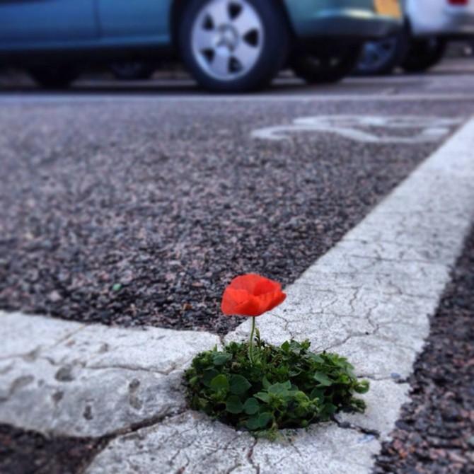 fiore-in-parcheggio.jpg