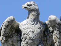 Eagle_in_Roma